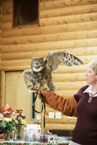 Merlin, our great horned owl