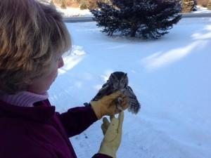 owl release 1